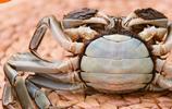 謝霆鋒親臨陽澄湖,親手告訴美女怎麼選大閘蟹,你會了嗎?