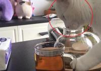 主人泡壺茶功夫回來,一看貓咪爪子,伸進了杯子裡