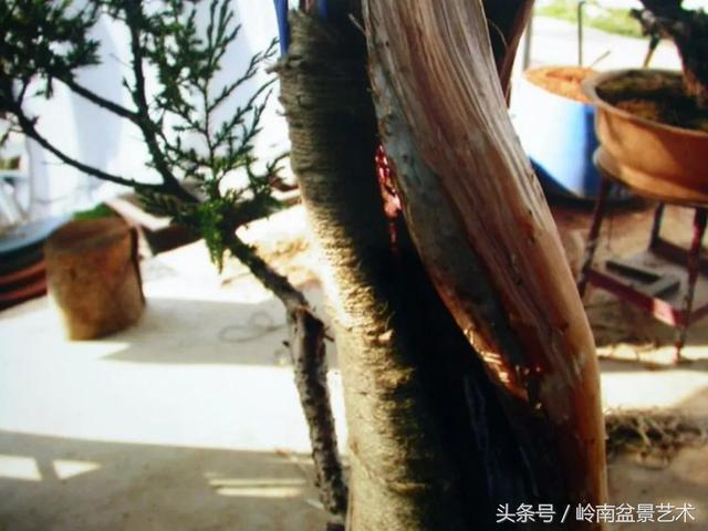 神來之筆——卞海的盆景藝術創作(100多圖)