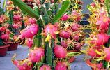 """這6種""""果樹盆栽""""火了,好養易活不佔地,現在種下,來年大豐收"""