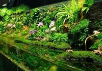 10款個性鮮明的水陸缸,看了這些作品才知道,還是水陸缸省事