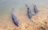 """嘿!電魚不吃香了,中國造""""自動吸魚鉤"""",往水裡一丟,一鉤三魚"""