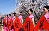 沒想到,山西晉南舉辦山野杏花節,人群成了花海里的風景