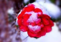 塔羅占卜:下面這4朵花你最喜歡哪朵?測這個冬天會發生什麼好事