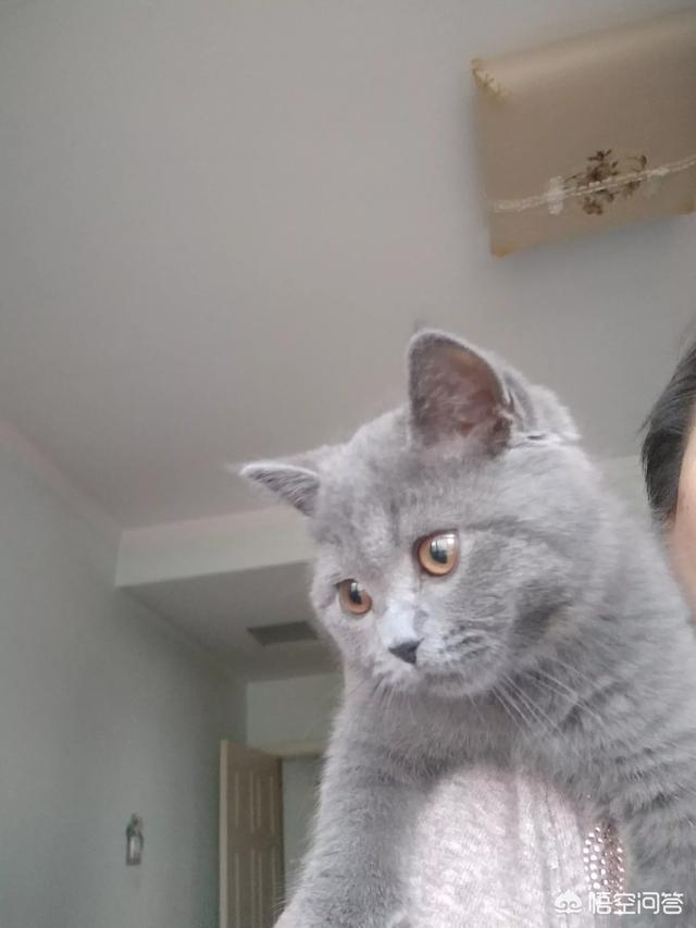 為什麼很多女孩子都表現得非常喜歡貓?