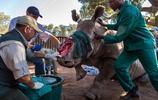 實拍黑犀牛被偷獵殘忍殺死全過程