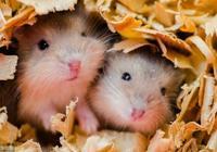 """冰凍三尺,非一日之:""""鼠鼠鼠""""將大逆襲,即將有奇蹟降臨"""