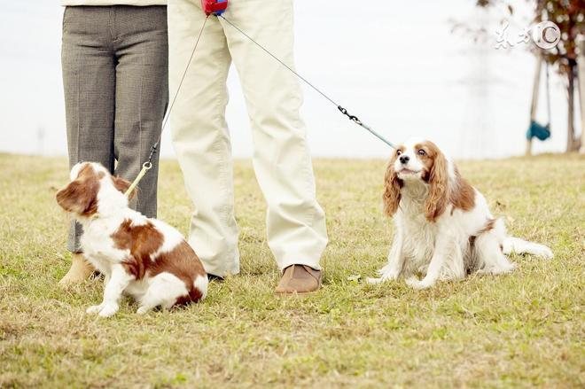 你家有屬狗人嗎?未來30天有彩票運,脫貧致富就靠它了!