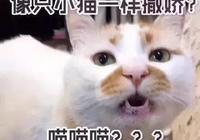 貓知道自己是貓嗎?