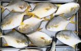 年夜飯該上什麼海鮮 小編菜市場探訪 新鮮冰凍都不錯