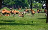 大豐麋鹿自然保護區