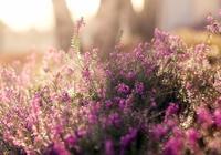 歲月,依一抹淺香於心間,看年華向晚,聞花香送暖,給時光一個淺淺的回眸;給自己一份微笑從容