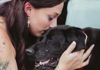 15歲老狗狗得了腦癌沒辦法走路,婚禮上卻堅持為主人這樣做!