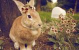 萌萌噠精靈小兔
