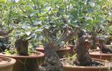 小夥養花全靠撿,全家人都反對,看到盆栽後都笑了