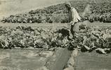 老照片:專供皇家?集體逃亡?北京菜園有哪些少為人知的故事?