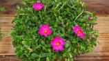 幾款庭院開花植物,給你一個芬芳美麗的夏天