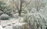 現在南京到底有多冷?看了這圖你就知道,雖美但只想為這隻鴨默哀