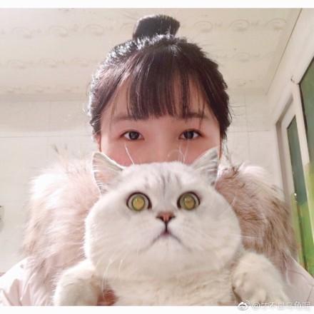 這些貓咪長得比人還大,朋友你的臉都快蓋過我的腦袋了