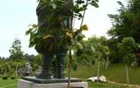 三亞:太不可思議了,佛像後面長出一棵菩提樹
