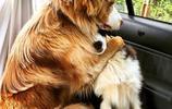 當你的狗狗和貓咪要去看醫生的時候它們會怎麼做呢?快來看看吧!