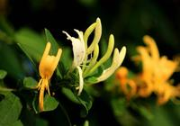 這些常見的植物你只把它當花賞?其實它渾身是寶呢