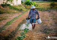 中國人遠赴非洲種菜,竟然賺得盆滿缽滿?