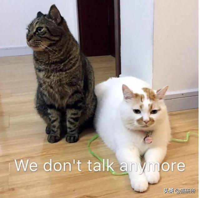"""人貓之間也有""""七年之癢""""?不,你想多了,可能是三年"""