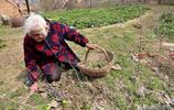 四世同堂曾孫患上白血病 89歲老人誤信偏方夜以繼日挖蒲公英