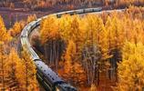 屬於胡楊林的美麗