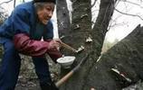 農村奇怪老太太給樹喂米飯,得知真相後,科學家都懵了!