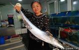 青島家常鮁魚25元一斤 10斤大鮁魚還得40元一斤 海鮮魚價格偏高