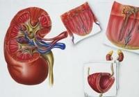 糖尿病患者怎樣預防糖尿病腎病?