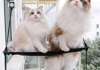 喜歡主人的貓咪,通常有這四個表現,根本藏不住!