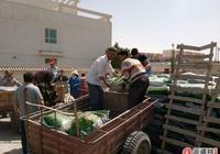 且末農業局40噸有機肥送到親戚家門口