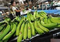 144.5萬公噸 中國首超日本成菲律賓香蕉最大買家