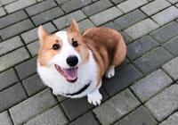 想讓狗狗更聽話?用這幾個方法就能輕鬆馴服狗子們