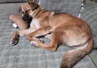 為什麼,養狗狗的人很快會和狗狗建立難以割捨的感情?長期餵養很麻煩,給人又不捨得?