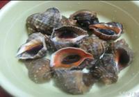 海螺殼這樣去除,才好吃蔥油海螺!