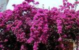 別讓你家的庭院太過空蕩,種上這幾款爬藤,庭院美如仙境