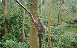 廣西隆安龍虎山,活潑的猴群,溶洞的奇觀都在這裡