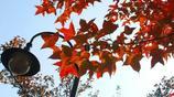 杭州的秋天,安靜又美好,帶你領略不一樣的杭州