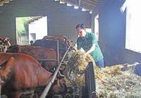 養牛到底賺錢嗎?養牛行不行啊