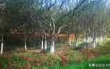 美麗吉安:濱江公園 吉安市最靚麗的濱江風景線