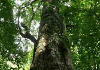 農村村民砍伐自家種的樹卻要罰款坐牢,專家是這麼說的!