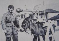 """毛驢炸坦克!二戰德軍末日兵器:""""驢""""式自行反坦克炮"""