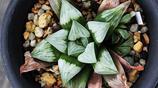 大神級別的多肉植物,今天把這些極品端出來拍張照