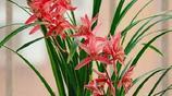 冬季超耐寒的6種花卉,讓家裡紅花不斷!超好養!死了算你厲害