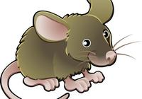 """72年的屬鼠人注意,今年要""""走運""""了,你家有屬鼠的嗎?"""