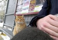 流浪貓看見家貓有主人抱,一臉的羨慕與嫉妒,網友們看了超心疼!